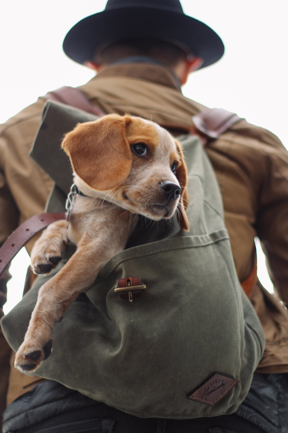 A man carrying a dog in his back pack